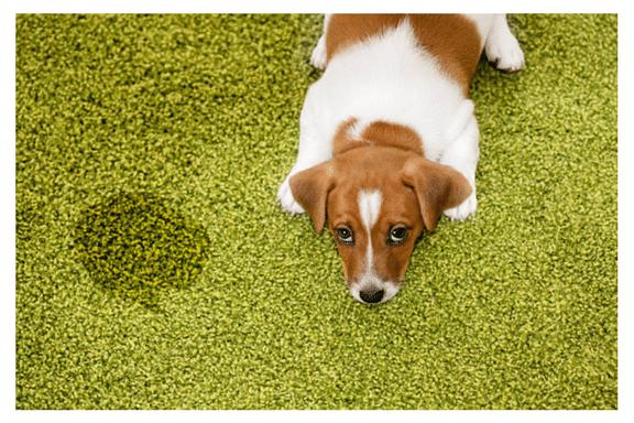 Carpet Cleaning Waukesha Wi 262 250 0900 Champion